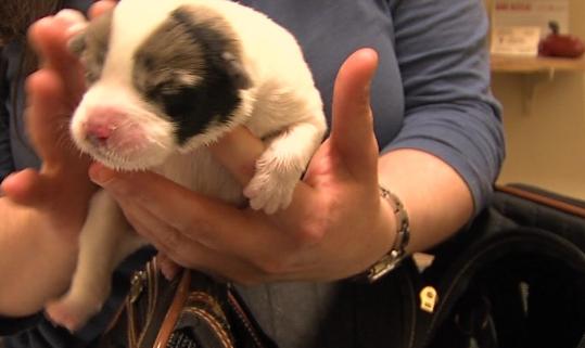 Injured puppy found in dumpster