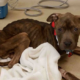 Emaciated dog found in condemned house