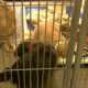 Rescue blacklisted from pulling dogs