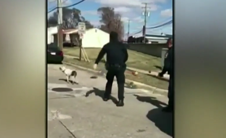 Video shows officers tasering a runaway dog