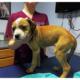 Puppy survives being thrown from a bridge
