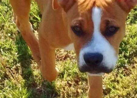 Murdered man's service dog killed