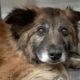 14-year-old dog surrendered
