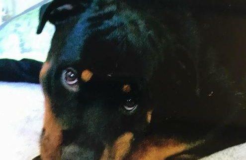 Dog missing after fatal accident