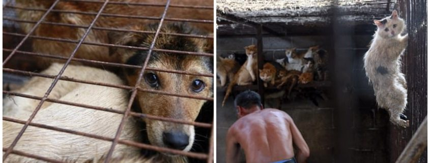 Dog meat banned at festival