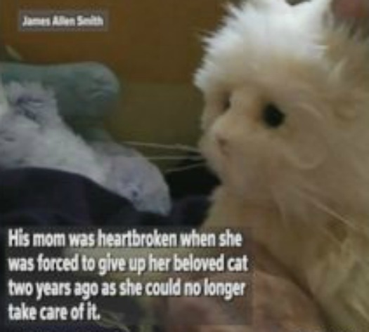 Son gives mom robotic cat after dementia forced her to surrender her