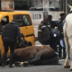Horse collides with taxi