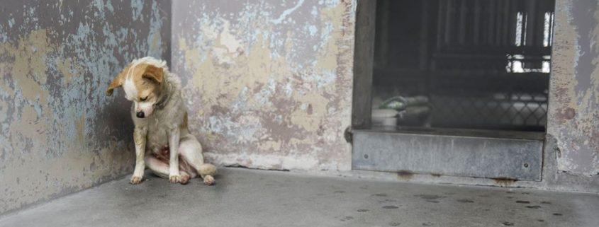 Photographer captures dog's despair