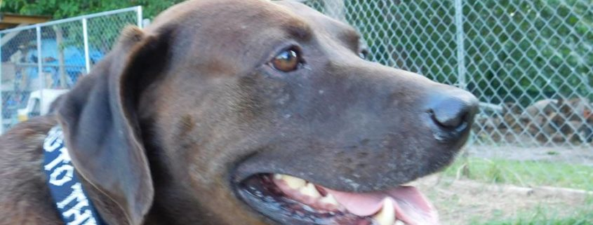 Chained dog beaten nearly to death with a hammer