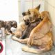 Street dogs face dismal fate
