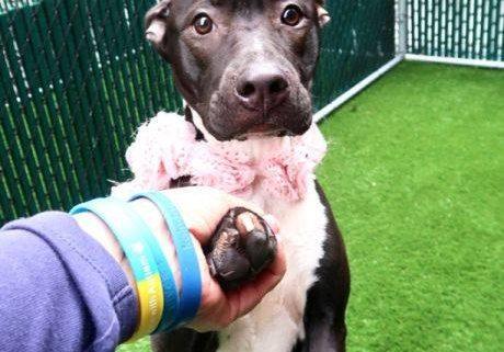 Overlooked death row dog