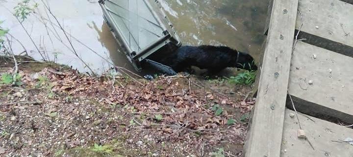 Crated dog abandoned in Alabama