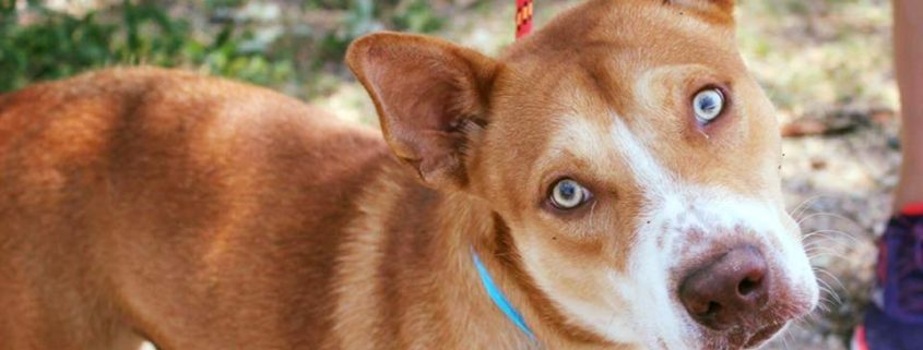 Forgotten dog moved to euthanasia room