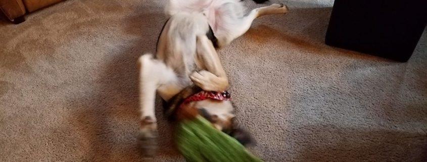 A near playtime tragedy