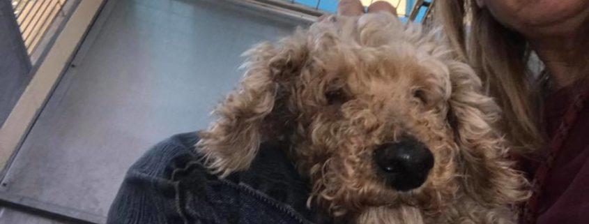 Blind senior dog is homeless