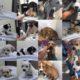 Crisis at one Texas animal shelter
