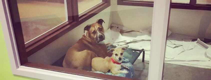 Shelter wants bonded friends to stay together