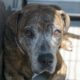 Senior dog surrendered by her family