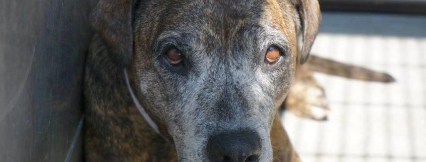 Senior dog surrendered by her family