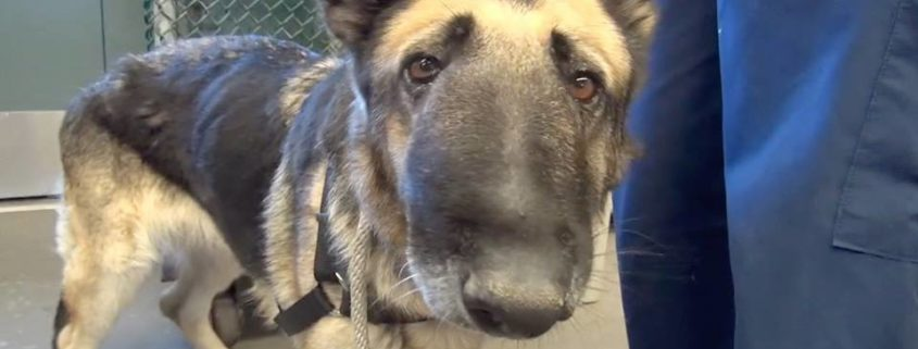 Dog's owners wanted her euthanized but strangers saved the day