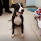Family sobbed when they were forced to surrendered beloved dog