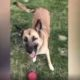 Utility worker accused of killing dog
