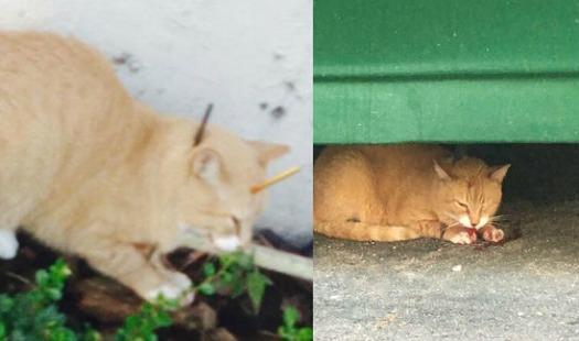 Stray Cat Rescue Miami