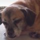 Senior dog at packed animal shelter out of public view