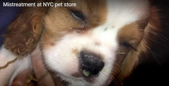 Alleged abuse at NYC pet store caught on video