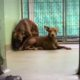 Terrified, bonded dogs at animal control