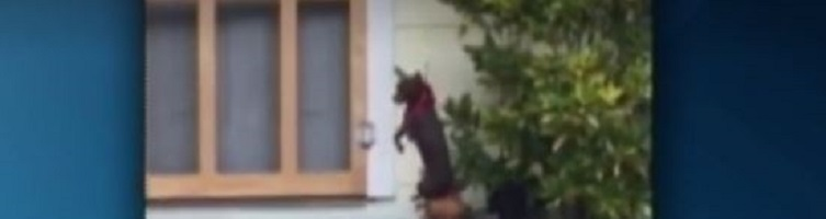 Video of dog hanging from leash