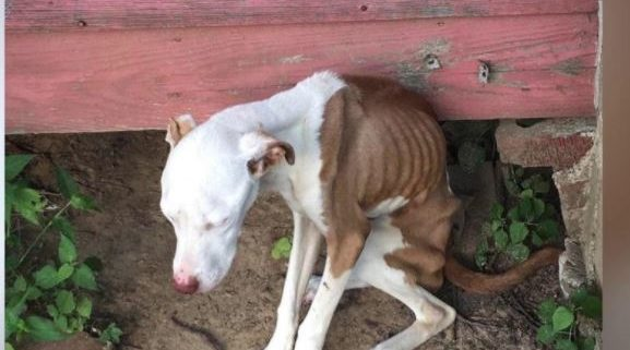 Left to starve for months in backyard