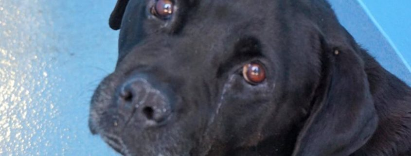 Her heart is broken after family surrendered