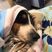 severely injured dog found beneath train
