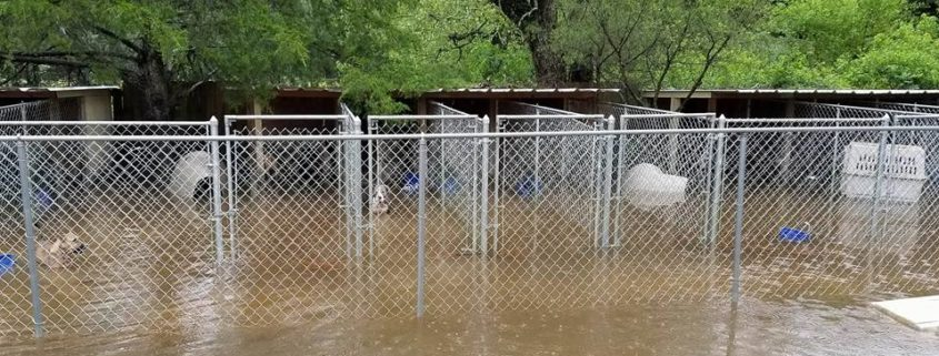 Open dam floods animal rescue