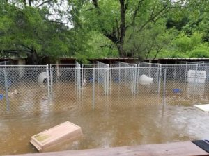 dire situation in flooded texas
