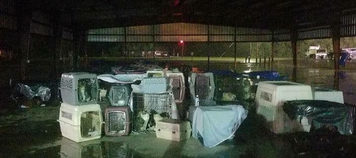 Dogs rescued from flooded shelter