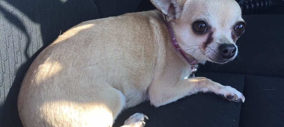 window busted to save dog in hot car