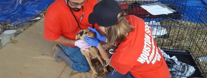 Houston shelter addresses rumors about killing dogs