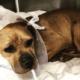 Abused dog thrown away like trash