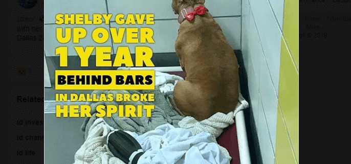After more than a year homeless dog's spirit is broken