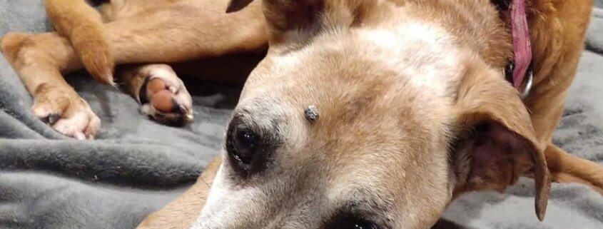 Ailing dog found in upstate NY