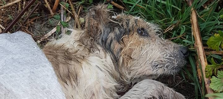 Ailing dog left to die in forest