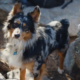 Dog missing after fireworks