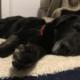 Bear the dog has passed away