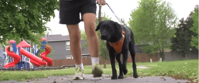 Blind woman and guide dog struck by a truck