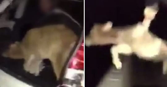 Disturbing video of baby calf tossed off bridge leads to cruelty arrest