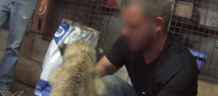 Disturbing abuse captured in undercover zoo video