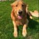 Digging dog named honorary narcotics K9
