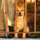 Chinese city wants to ban dog meat consumptijon
